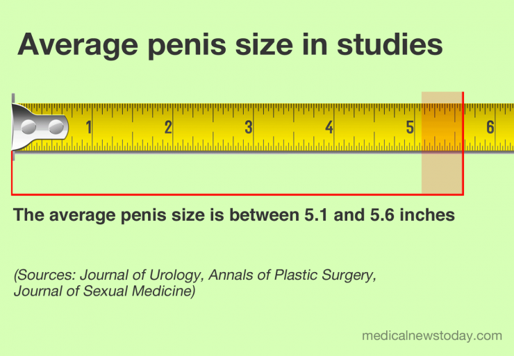What is the average penis size for men